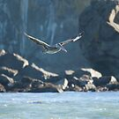 Pelican Grace in Flight by Dale Lockwood