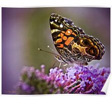 American Painted Lady II Poster
