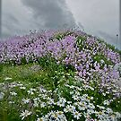 Landscape and Floral Pastel Paintings . Norway .Nordland . june 2012. by Andy Brown Sugar. Featured in Eastern European Art. Thx! by © Andrzej Goszcz,M.D. Ph.D