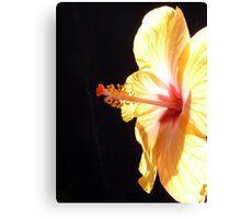 Fiery hibiscus  Canvas Print
