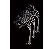 Bent Trees Photographic Print