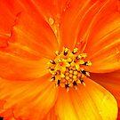 Orange Beauty by KatarinaD