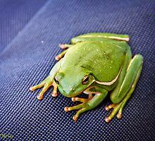 A Green Frog by Lightengr
