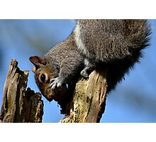 Squirrel 053 Photographic Print