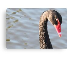 Black Swan Closeup Canvas Print
