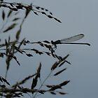 Winfield Dragonfly by KimSha