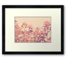 Camellia Bush Framed Print