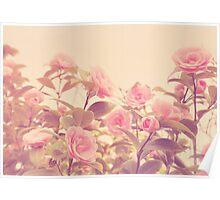 Camellia Bush Poster