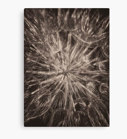 Allium Seed head in monochrome Canvas Print