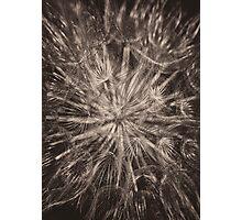 Allium Seed head in monochrome Photographic Print