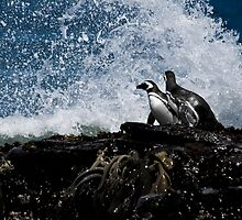Penguin On The Rocks by MarkHRoberts