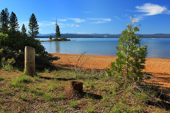 Pine Trees In Lake Almanor by James Eddy