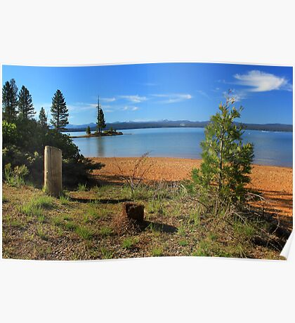 Pine Trees In Lake Almanor Poster