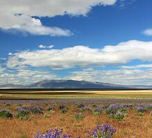 Lupines In Honey Lake Valley by James Eddy