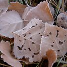 Frosted Leaves by KimSha