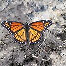 Muddy Monarch by KimSha