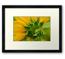 Nature's Abstract 9 Framed Print