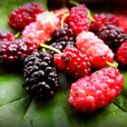 black mulberry by Cengiz Orhan