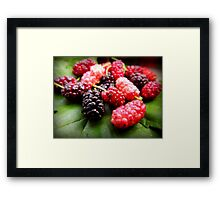 black mulberry Framed Print