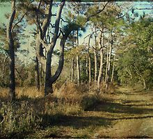 Beach Nature Trail - Buxton NC - Outer Banks by MotherNature