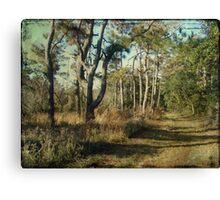 Beach Nature Trail - Buxton NC - Outer Banks Canvas Print