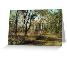 Beach Nature Trail - Buxton NC - Outer Banks Greeting Card