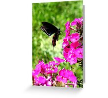 Spicebush Swallowtail, Female #4 Greeting Card
