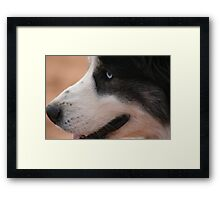 Border Collie with Blue Eyes Framed Print