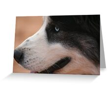 Border Collie with Blue Eyes Greeting Card