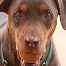 Waiting Doberman by KelseyGallery