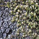 Mossy Fern Bark by KimSha