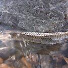 Snake skin by KimSha