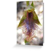 Bearded Man. Slender Beard Orchid - Calochilus gracillimus Greeting Card
