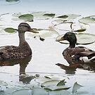 Mallard Duck Couple by Tanya Keefe