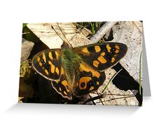 Furry Butterfly Greeting Card