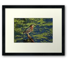 There's the Green ... Heron Framed Print