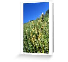 Prairie Grasses Greeting Card