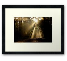 Forest Rays Framed Print