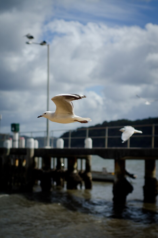 Gliding by Sherilyn Hawley
