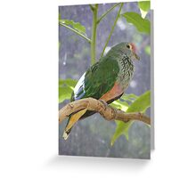 Divine Dove. Rose-crowned Fruit-dove - Ptilinopus regina Greeting Card