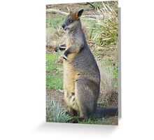Eucalyptus anyone? Red-necked (Bennets) Wallaby - Macropus rufogriseus Greeting Card