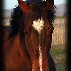 Where Horses Lead 2013 by Gina J