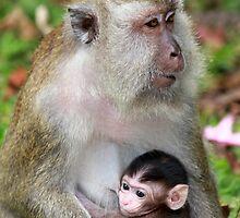 Monkey Baby by PerkyBeans