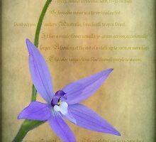 Wax Lip Orchid - Gossodia Major by pcbermagui