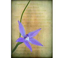 Wax Lip Orchid - Gossodia Major Photographic Print
