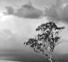One Tree Hill by Kezzarama