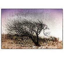 Bush Fire Tree Photographic Print