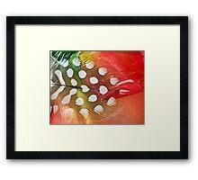 Rose Sherbet Framed Print