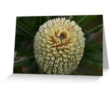 Banksia aemula Greeting Card