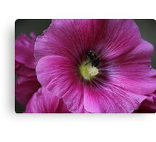 Powdered Bumble-Bee Canvas Print